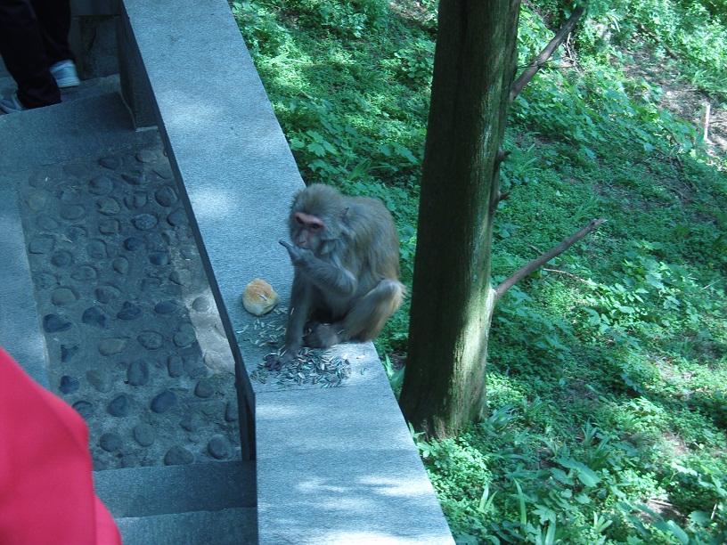 Un singe de 庐山 (Lu Shan)